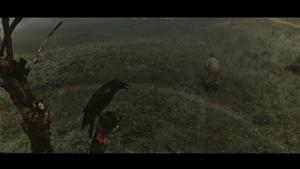 Desna-crow
