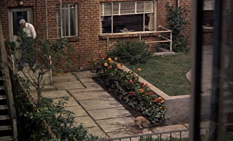 rear window movie essay