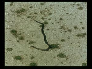 moses_und_aron_snake