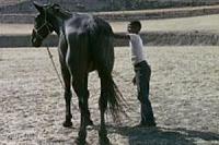 the-horse_charles-burnett