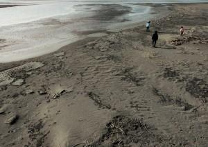 stray-dogs-beach