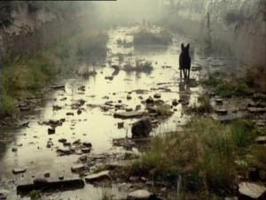 stalker-mud-dog
