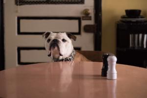 Paterson-bulldog